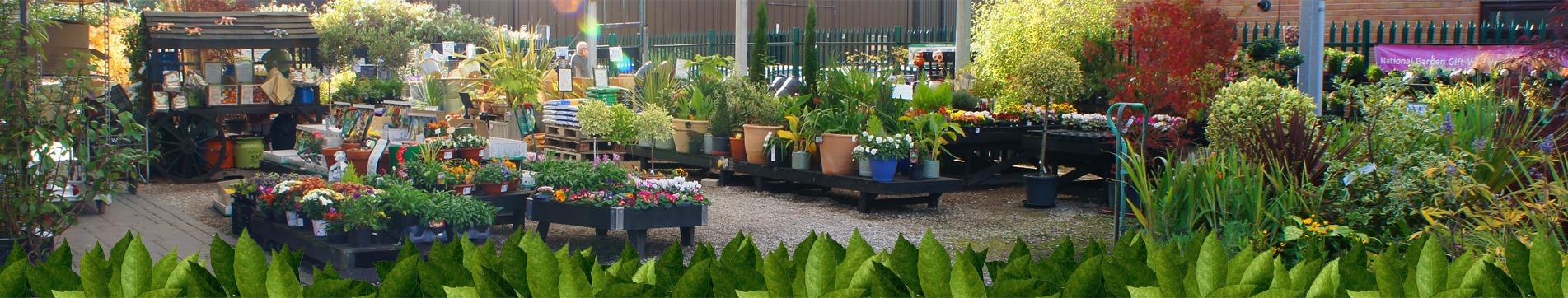 quality plants