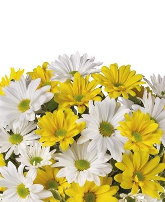 seasonal plants and seasonal offers